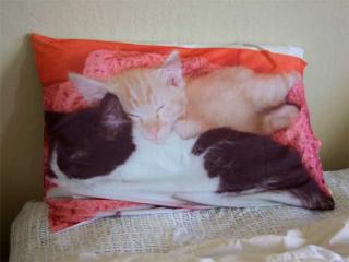 Sleeping Kitt-enz