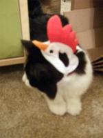 Chick-ten