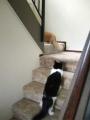 Nine & Ten Master the Stairs