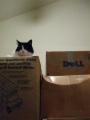 Box Warmer