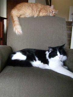 Chair Kittehs