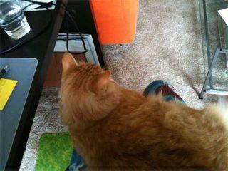 Lap Cat Evidence!!