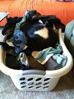 Warm Laundry is Irresistable