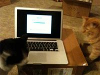 Komputer Kittehs