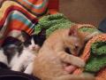 Snugglers