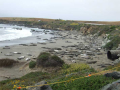 Elephant Seals in San Simeon